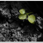 Friday Photo 2: New Life