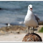Friday Photo 17: Mouille Point Seagull
